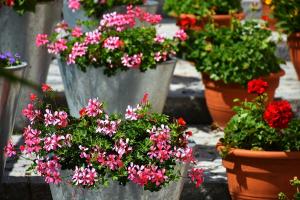 flores para decoración