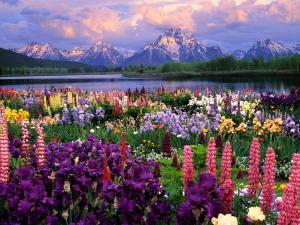 Paisaje de flores exóticas