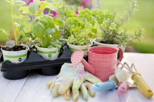 Plantas para su cuidado