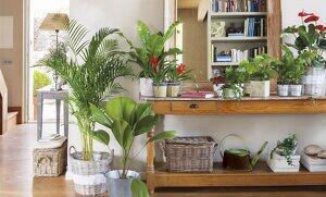 plantas para decorar los interiores