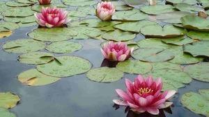 Las mejores plantas acuáticas