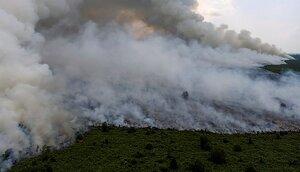 Els incendis d'Indonèsia fan perillar moltes espècies en perill d'extinció