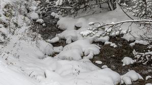 Els ecosistemes d'alta muntanya són especialment vulnerables al canvi climàtic