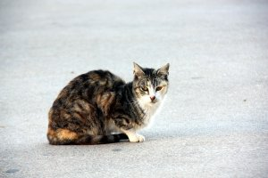 Una gata de carrer.