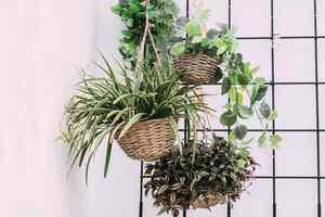 Las 8 Mejores Plantas Ornamentales para el Hogar