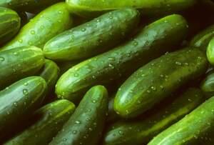 Delicioso, refrescante y muy nutritivo, el pepino es ideal para los meses de verano.