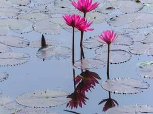 No te pierdas algunas de las plantas acuáticas más bellas e interesantes.