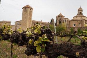 Celler Abadia de Poblet