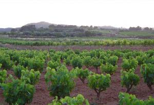 Vinyes Terra Alta