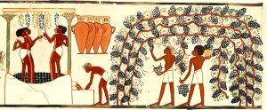 Egipte i el vi