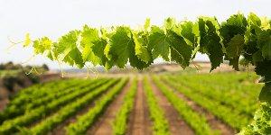 Vinyes del Cellers Tarroné