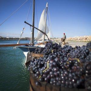 Arrels del Vi preparar la Festa de la Verema de l'Empordà