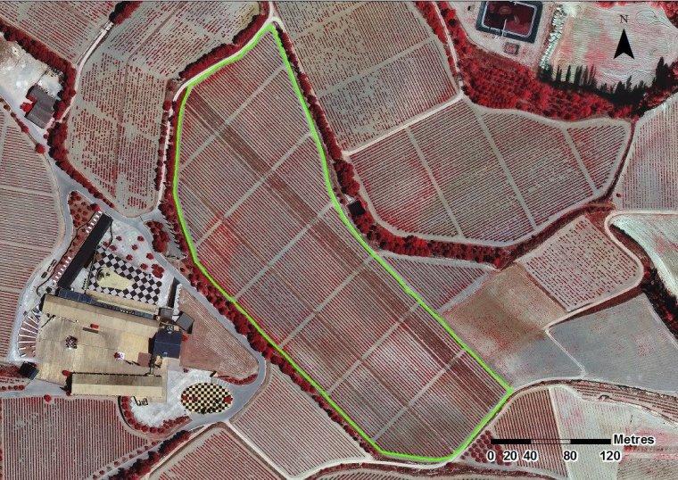 Imatges aèries amb infrarojos de les vinyes ecològiques de Juvé i Camps