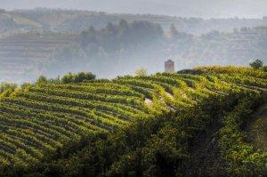 Panoràmica de vinyes al Priorat