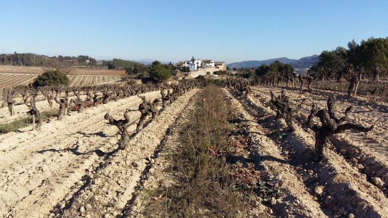 Heretat Can Castany des de la vinya de la Cervera (Paratge Can Prats)