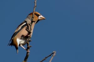 Els ocells en harmonia amb els vins de Segura Viudas