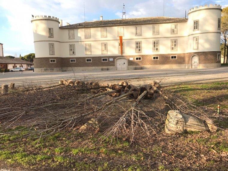 Plantació d'arbres a Castell del Remei