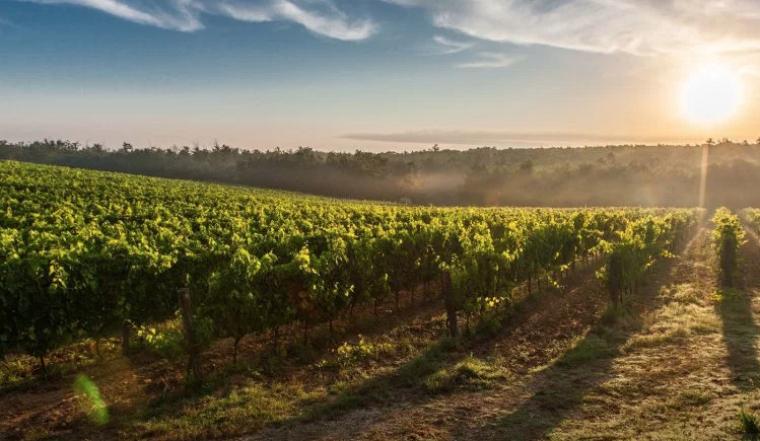 Celler vinícola de Sant Esteve de les Roures