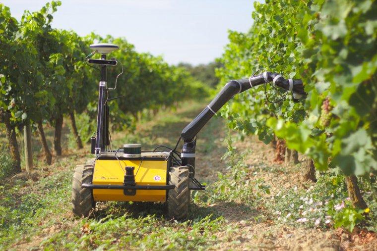 El robot Grape a la vinya de Mas Llunes