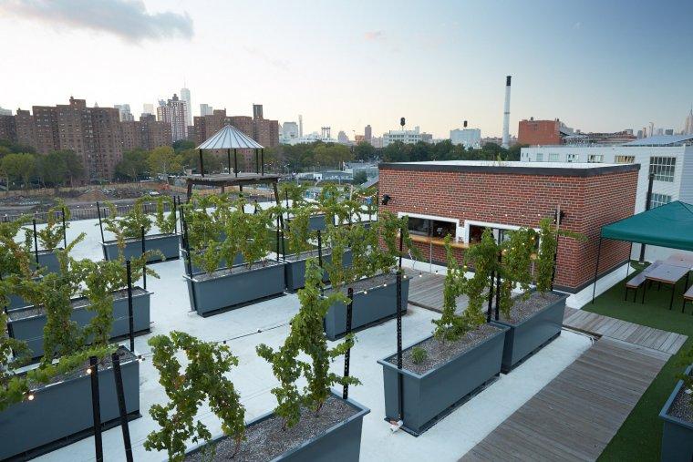Les vinyes de Rooftop Reds a un terrat de Nova York