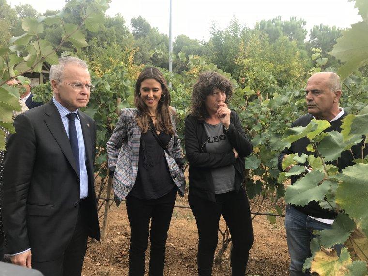 Visita a la vinya de Santa Coloma de Gramenet