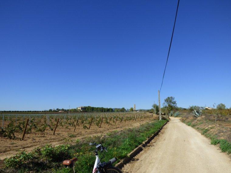 El camí del vi
