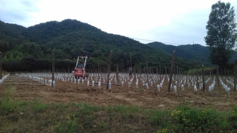 Les vinyes de Vins Ferrer de la Vall de Bianya