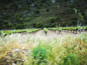 Vinya del Priorat