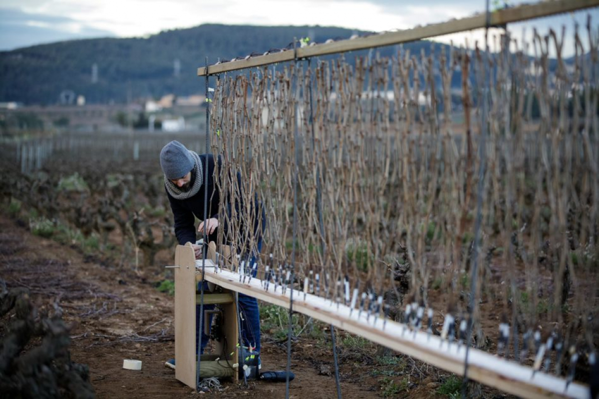 La  màquina natural per fer les etiquetes de Cultivare
