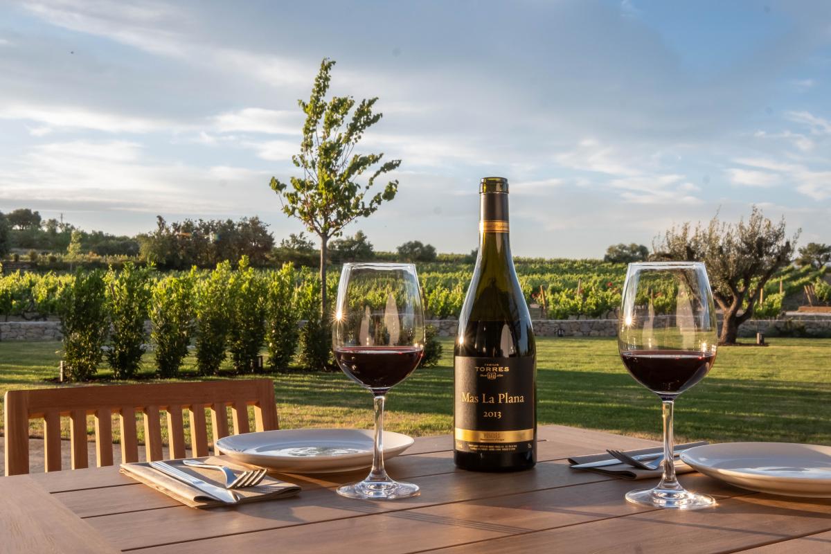 El Celleret de Torres està ublicat enmig de la vinya