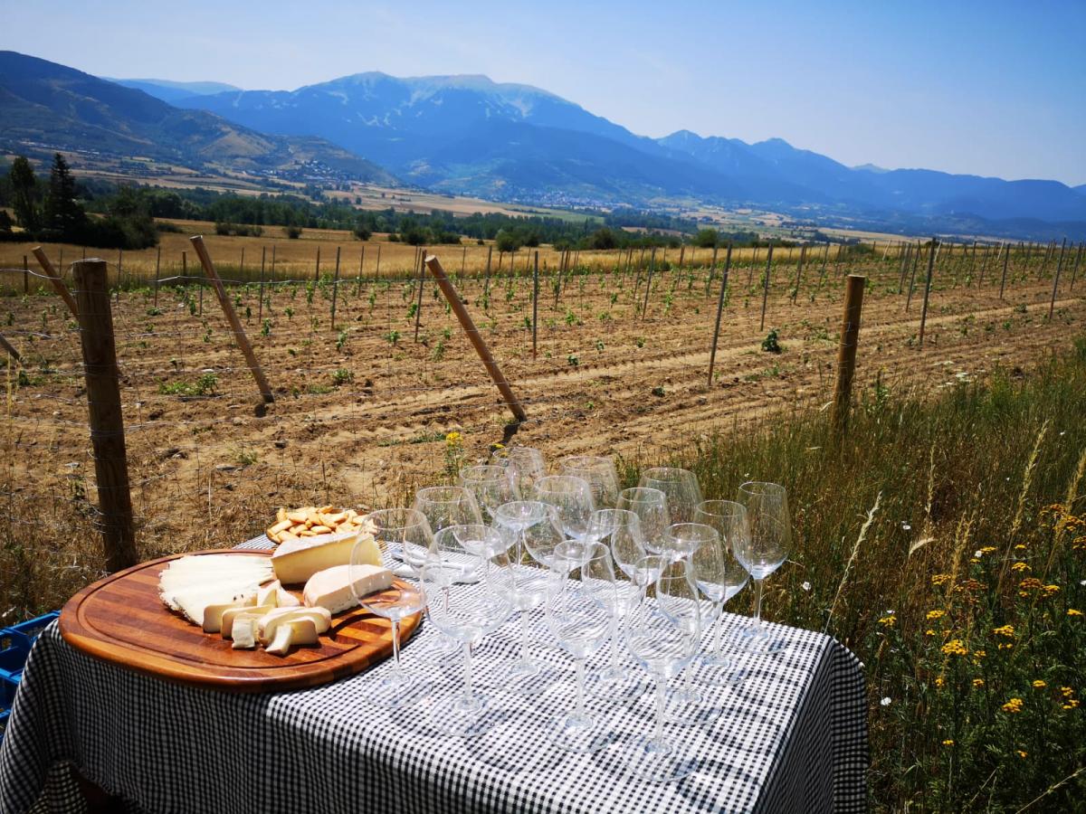Vins i formatge a peu de vinya la Cerdanya a Torre del Veguer