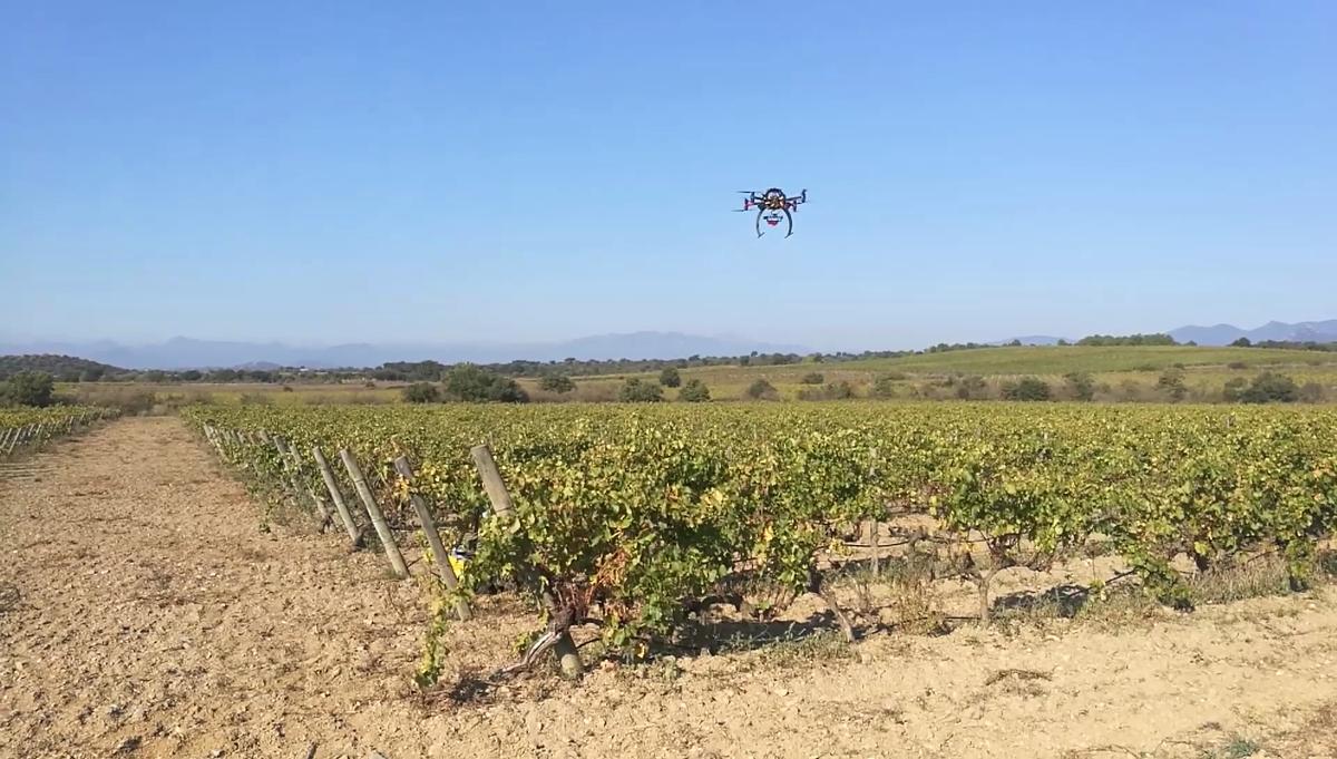 La vinya sota la supervisió dels drons que comparteixen informació amb dispositius robòtics