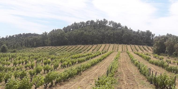 Finca La Vinya de Dalt