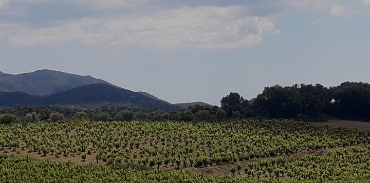 Finca Les Roques