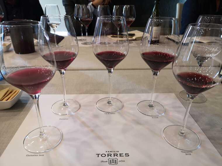 Les diferents varietats que conformen el Vinyaret de Torres