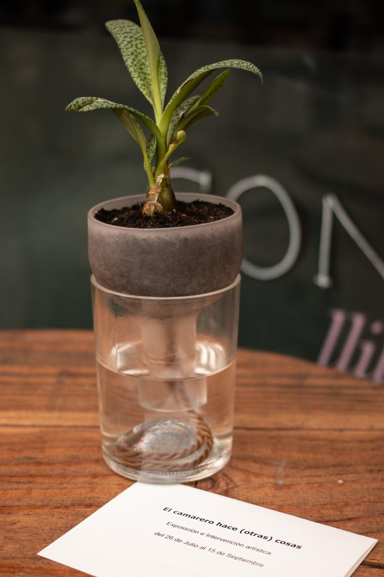 Un test per plantes que té la capacitat d'autoregar-se
