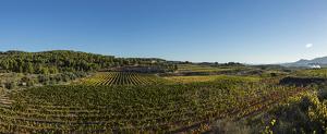 La finca d'on surt el Mas Edetària Selecció, el nou vi de finca de Catalunya