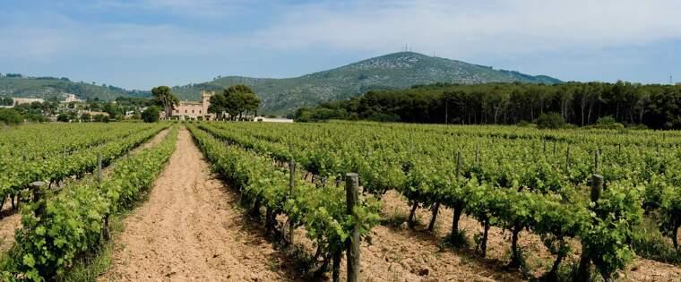 Les vinyes de Torres del Veguer un dels cellers de Clàssic Penedès