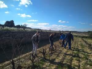 Alumnes de l'Escola de Gandesa fent pràctiques a la vinya
