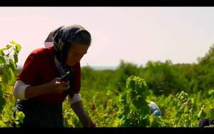 Una escena del documental The Promise sobre els vins d'un poblet de Sèrbia