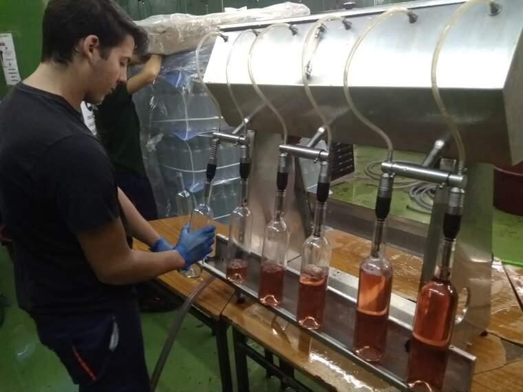 A l'Escola Agrària de Gandesa els alumnes elaboren el seu propi vi