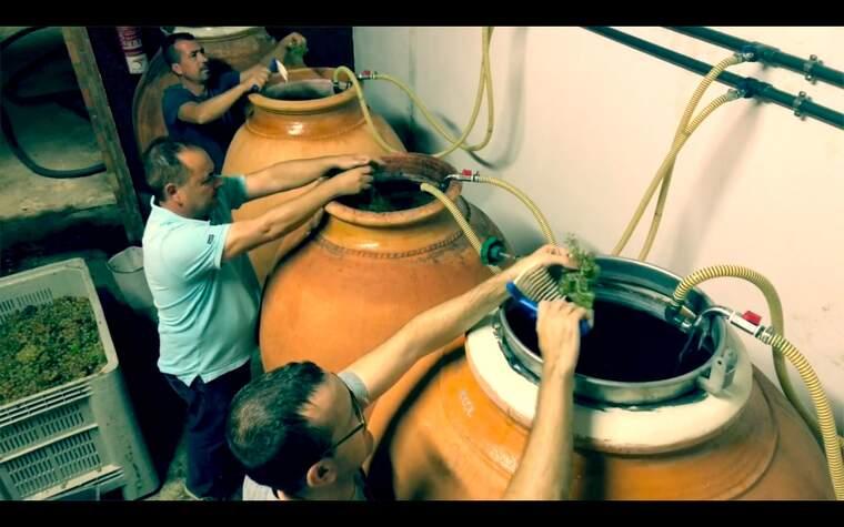 Al celler Loxarel treballen en àmfores per la fermentació dels seus vins