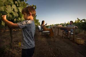 Esmorzar entre vinyes és una de les activitats familiars que ofereix el Penedès