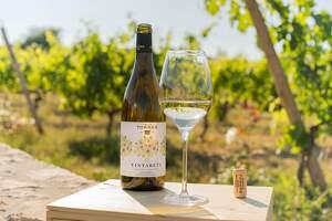 Vinyarets blanc és el nou vi de xarel·lo de Família Torres