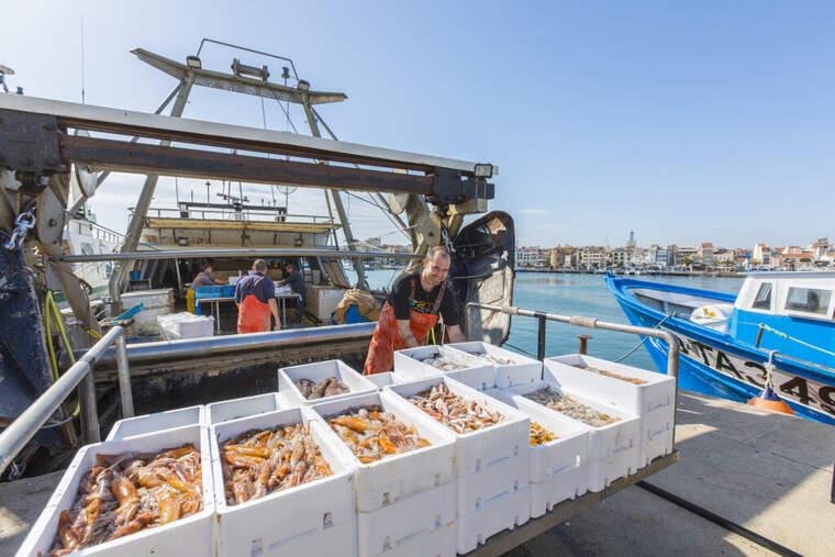 Pescadors de Cambrils descarreguen el peix