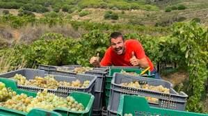 Albert Federico proposa fer un vi col·lectiu
