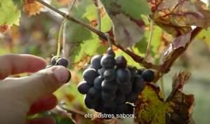 Un fotograma del vídeo de l'Incavi en el que es promou l'enoturisme