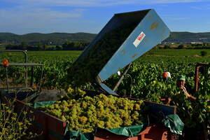 Vins vinets