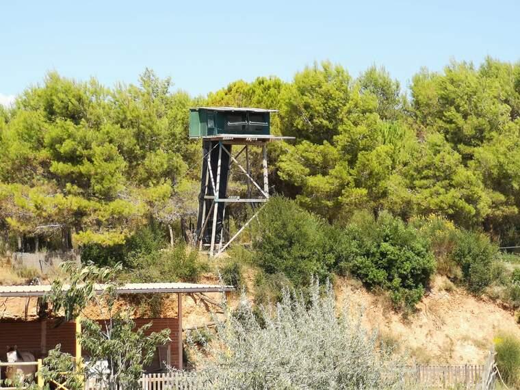 Aquesta torre és el niu dels falcons pelegrins de Gramona