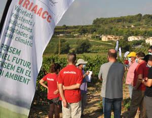 Un instant de la presentació de les vinye sde varietats resistents que s'ha fet aquest dijous